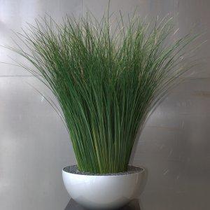 Dit is een interieur met Gynerium gras. De GroenStyliste van StudioCentro komt graag naar je toe om deze kantoorplanten te plaatsen.
