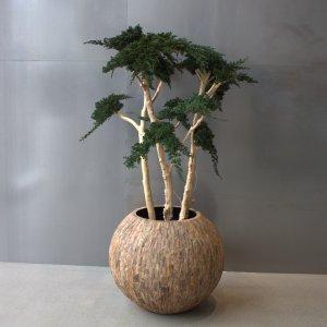 Dit is een interieur met een juniperus plant. De GroenStyliste van StudioCentro komt graag naar je toe om deze makkelijke kamerplanten te plaatsen.