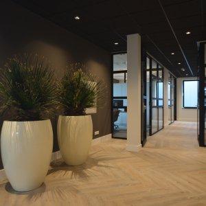 Dit is een interieur met Washingtonia palmen. De GroenStyliste van StudioCentro komt graag naar je toe om deze kantoorplanten te plaatsen.
