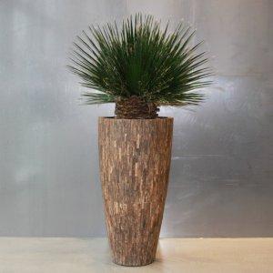 Dit is een interieur met een Washingtonia palm. De GroenStyliste van StudioCentro komt graag naar je toe om deze kantoorplanten te plaatsen.
