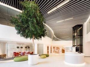 Dit is een interieur met een Eucalyptus boom. De GroenStyliste van StudioCentro komt graag naar je toe om deze kantoorplanten te plaatsen.