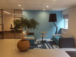 Dit is een interieur met een Pittosporum. De GroenStyliste van StudioCentro komt graag naar je toe om deze makkelijke kamerplanten te plaatsen.
