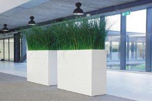 Dit is een interieur met mummie siergras, een prachtige kantoorplant. De GroenStyliste van StudioCentro komt graag naar Amsterdam om deze makkelijke kamerplanten te plaatsen.