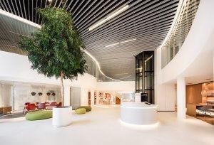 Dit is een interieur met een gemummificeerde boom. De GroenStyliste van StudioCentro maakt graag een afspraak om deze prachtige kantoorplanten te plaatsen.
